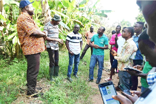 UNDP Launches App For Tree Registration