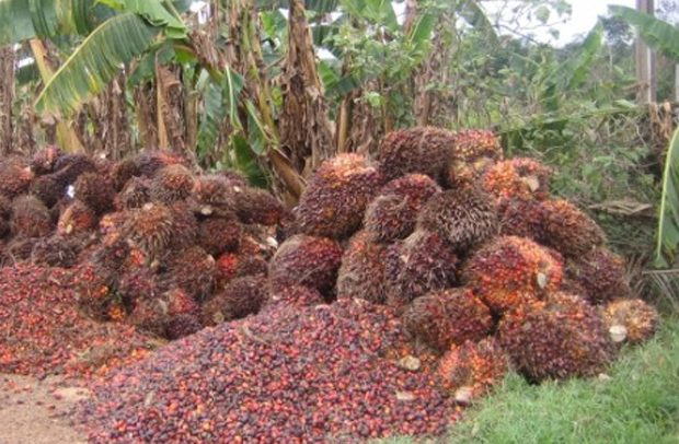 Ghana Exports $101 4m Palm Oil Products - DailyGuide Network