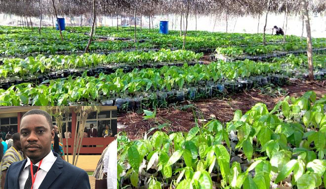 Cocoa And Cashew Seedlings For Kwahu East Farmers