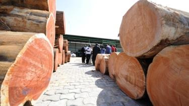 How 300 Containers Of Gabon's Precious Timber Went Missing