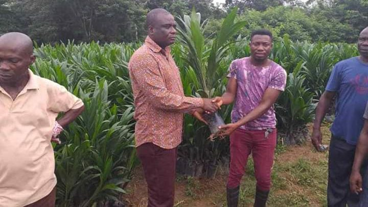 DCE Distributes 50,000 Palm Seedlings To Farmers
