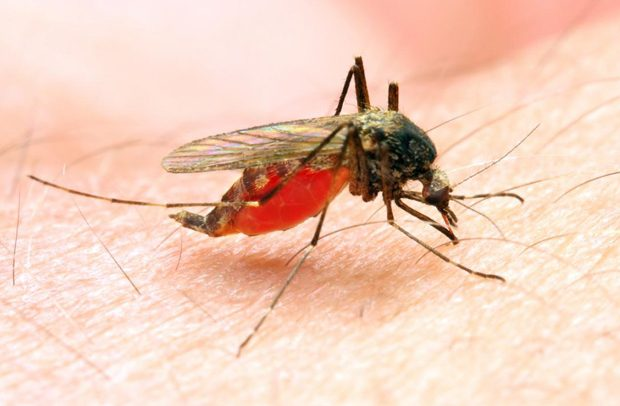 ARHR, Others Begin Malaria Research