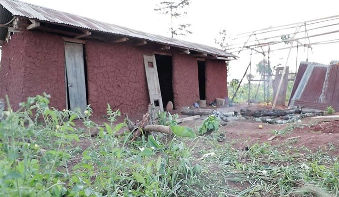 Life Returns To Abandoned Village After Cocoa Farm Rehabilitation Programme
