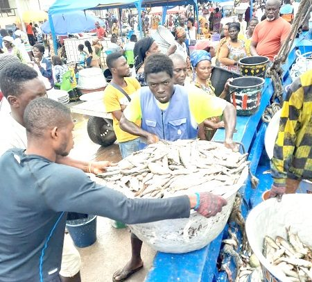 Bumper Catch For Fishermen After Closed Season